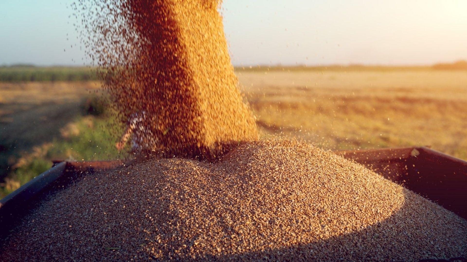 Добра реколта на пшеницата в Добричка област, имаме повече от миналата година