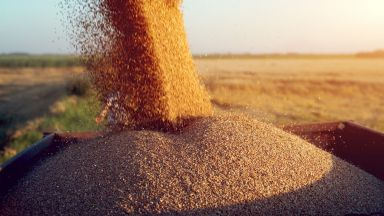 Китай е готов да купи до 7 милиона тона американска пшеница