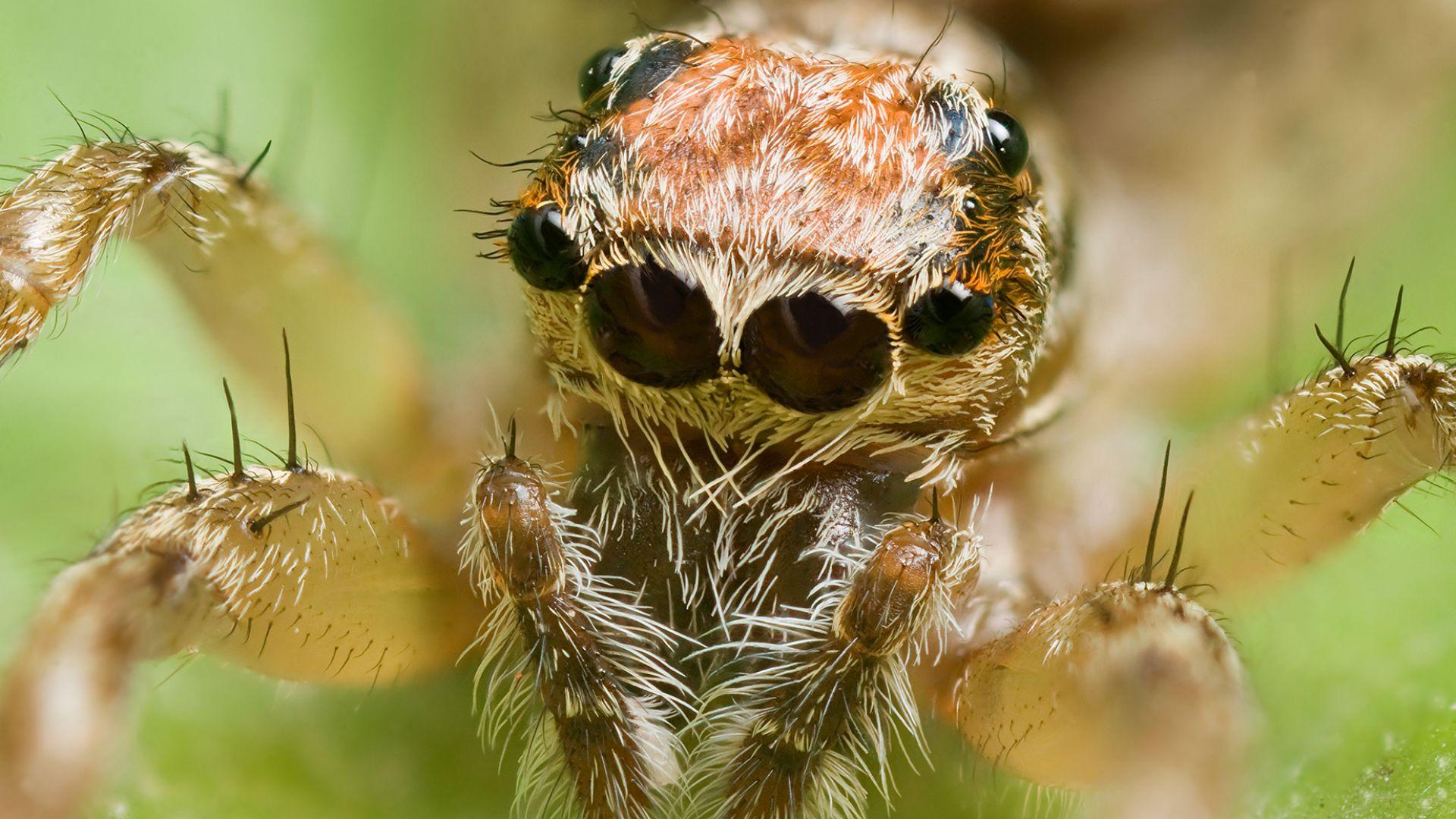 Ако паяците се обединят, ще унищожат човечеството за година