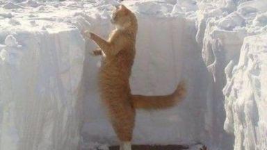 20 снимки, доказващи, че котките и снегът са несъвместими