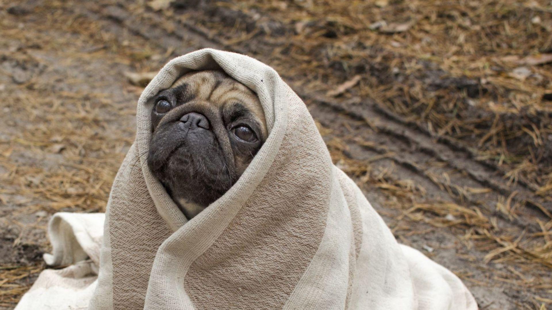 """Ще стане ли декември първият """"студен"""" месец от 2 години насам?"""