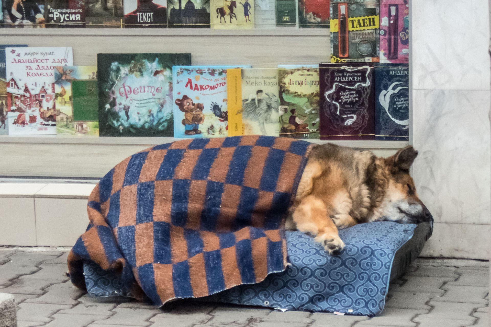 """Софиянци се погрижиха за бездомно куче на ул. """"Раковски"""" в навечерието на Коледа"""