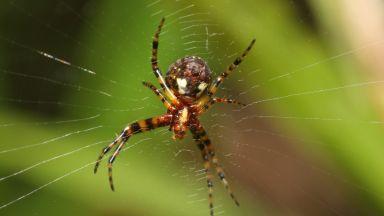 Препирня с паяк вдигна на крак австралийската полиция