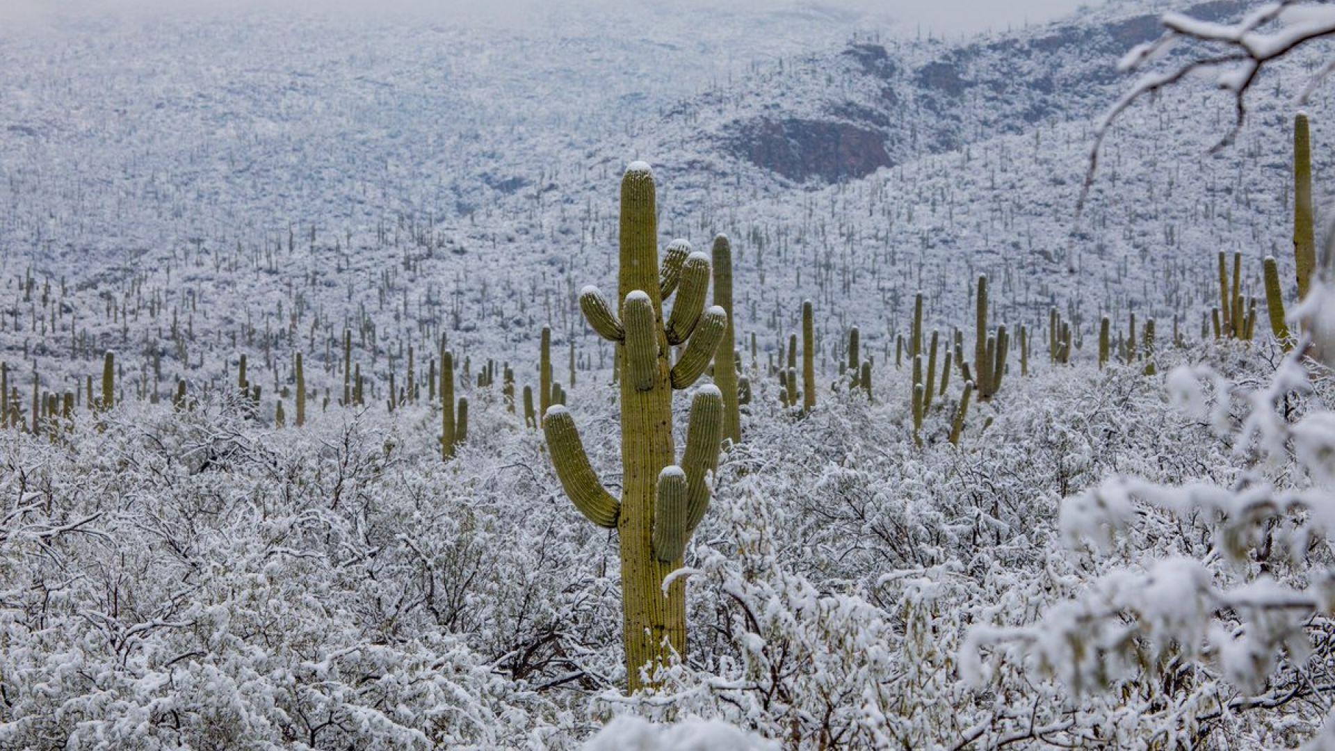 Сняг падна в пустинята в Аризона (снимки)