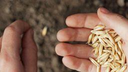 Зърнопроизводителите могат да кандидатстват за нисколихвени кредити