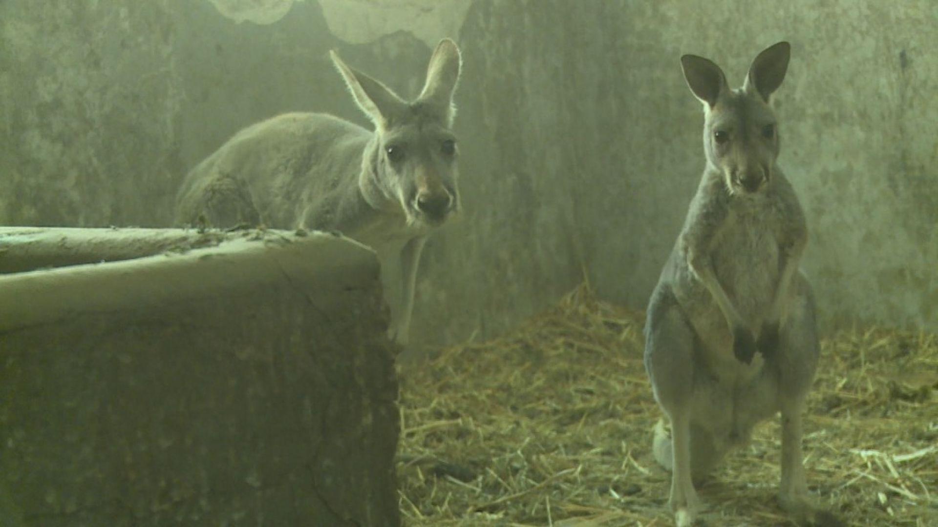 Бейби бум в столичната зоологическа градина