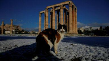 Атина осъмна в бяло, алпийски крави бедстват в преспите