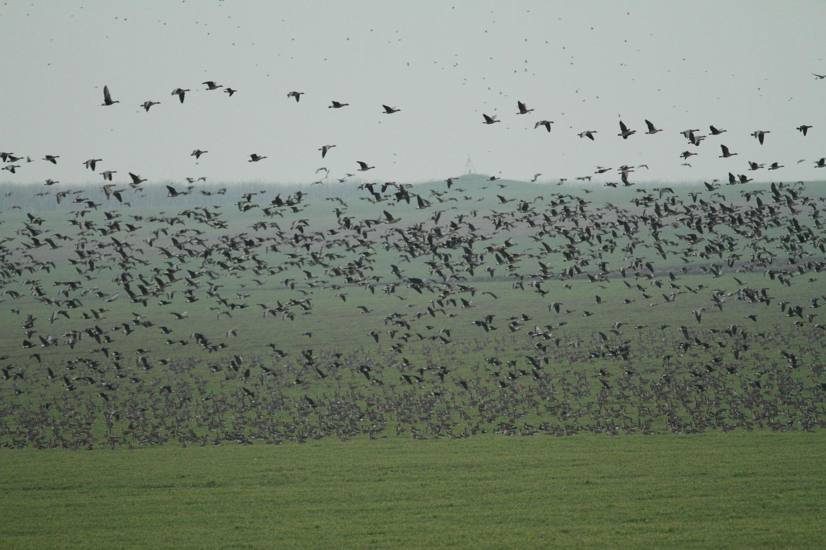 Ята водолюбиви птици