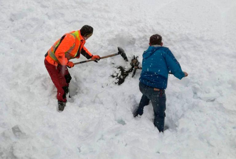 Австрийски служители на железопътния транспорт спасяват дива коза, затрупана в снежната покривка парк в централната част на Австрия
