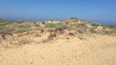 """Спешна проверка, след като разораха дюните на """"Къмпинг Смокиня"""""""