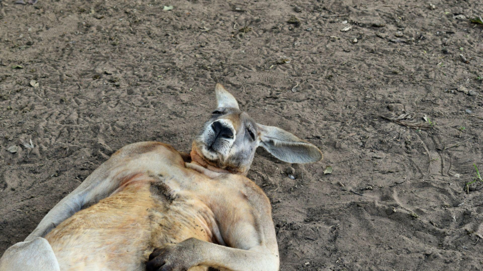 Опасни и продължителни горещини започнаха в Австралия (снимки)