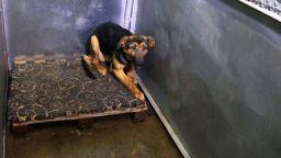 717 кучета осиновени от началото на годината от общинските приюти в София