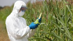 Учени: Противниците на ГМО са невежи