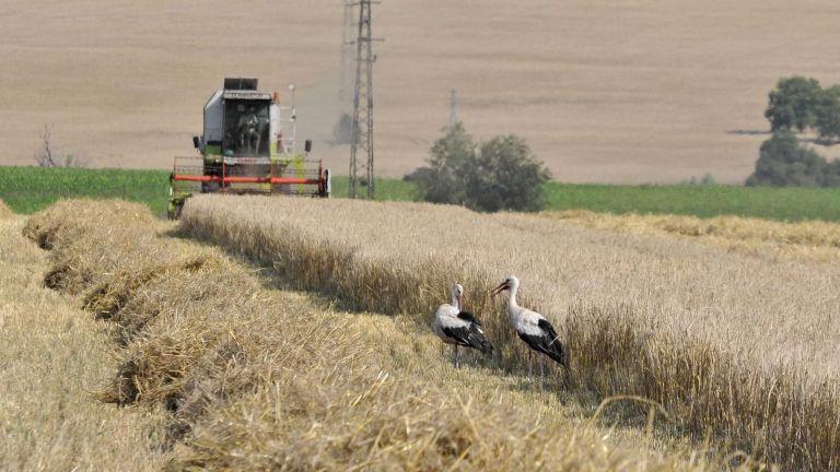 Цените на земеделската земя у нас гонят нови рекорди