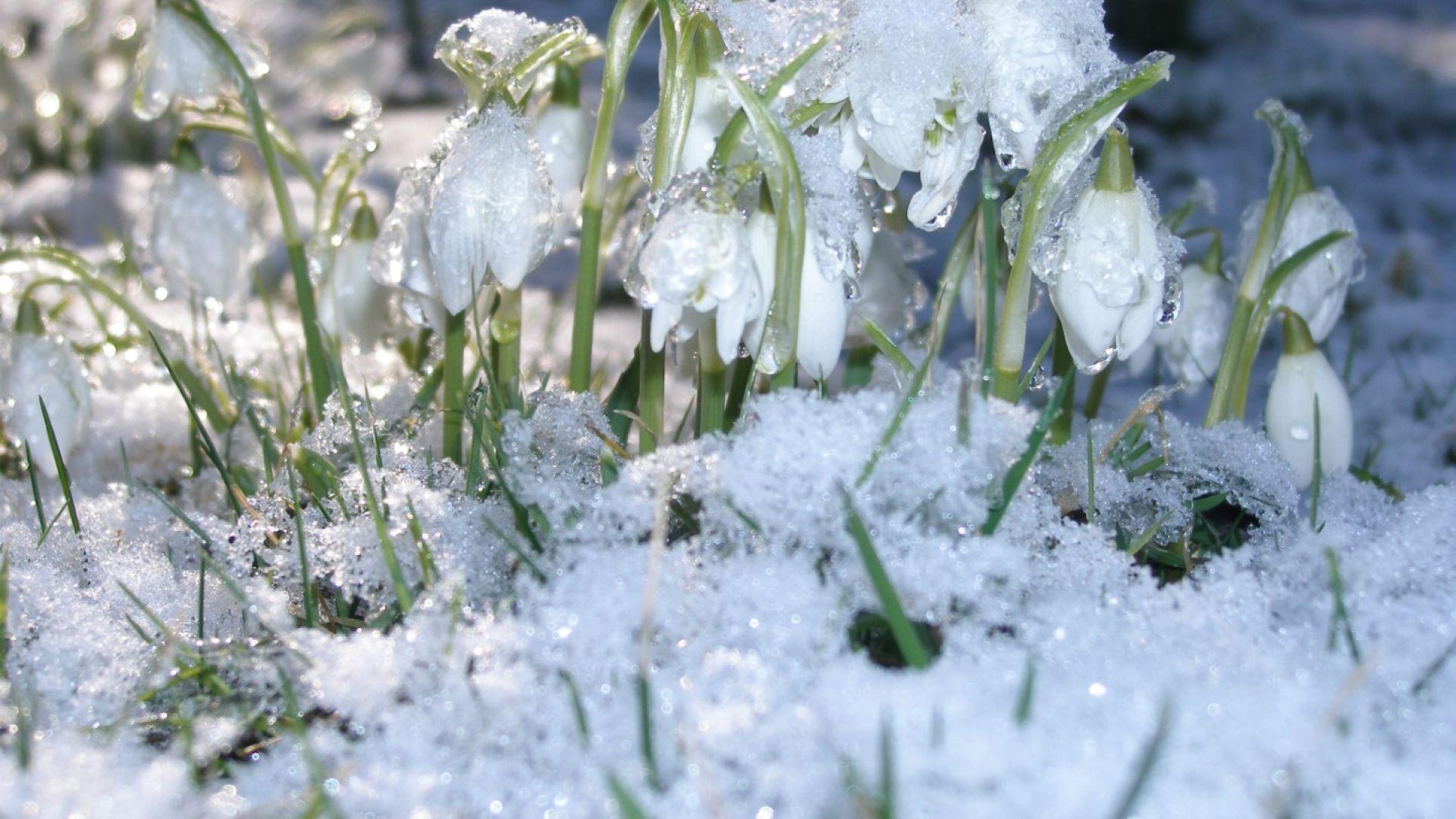Януари се предава: дъжд и меко време в следващите 7 дни