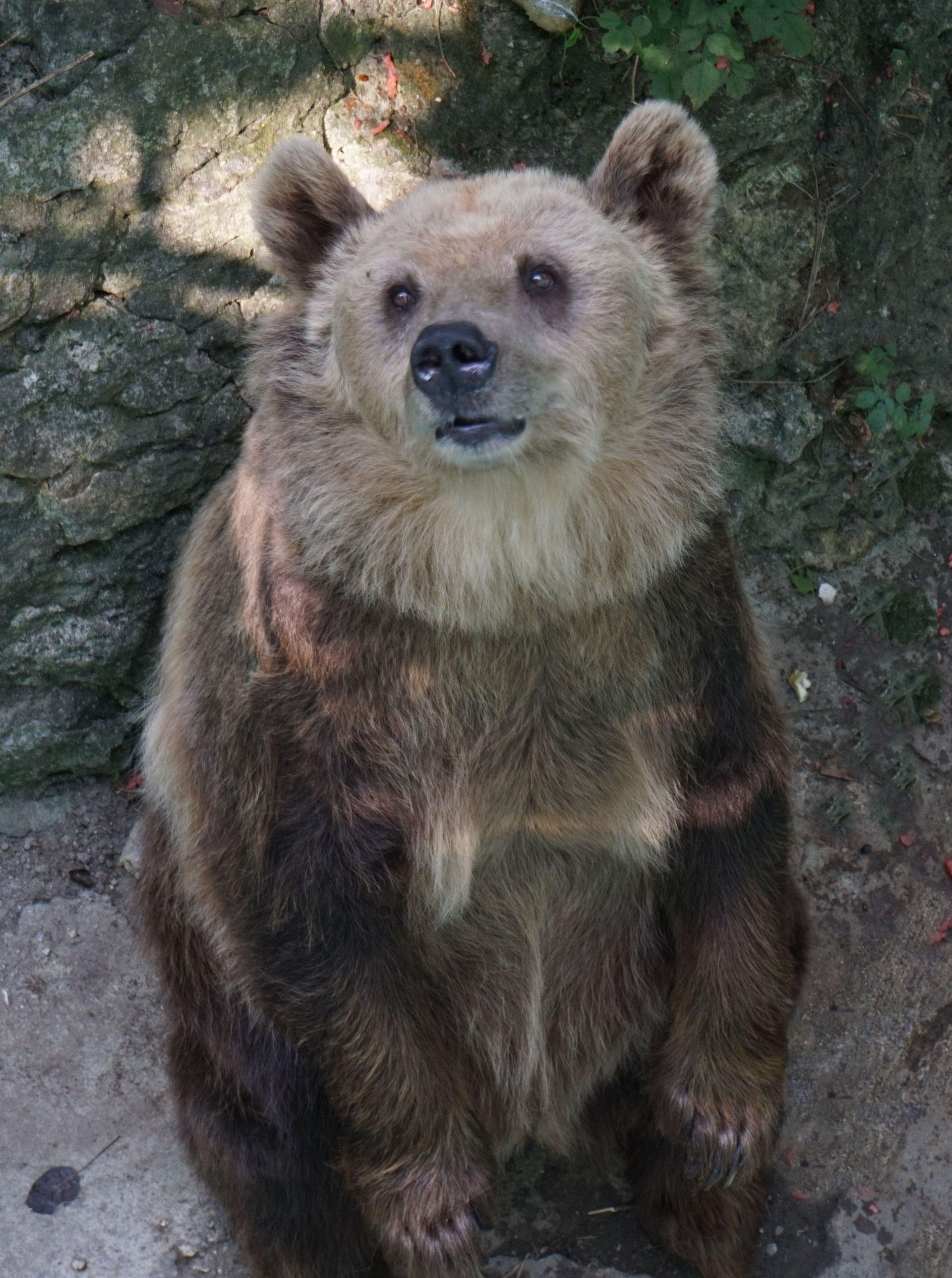 Мечката Свобода от варненския зоопарк празнува 30-годишен юбилей