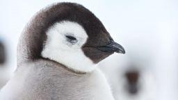 Кои животни ще преживеят глобалното затопляне и кои - не