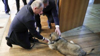 Путин си тръгва от Белград с овчарката Паша (снимки)
