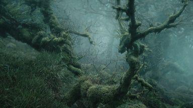 Омагьосваща гора в Англия плаши и покорява сърцата