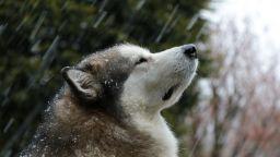 Идат силни дъждове и сняг, възможни са и опасни явления