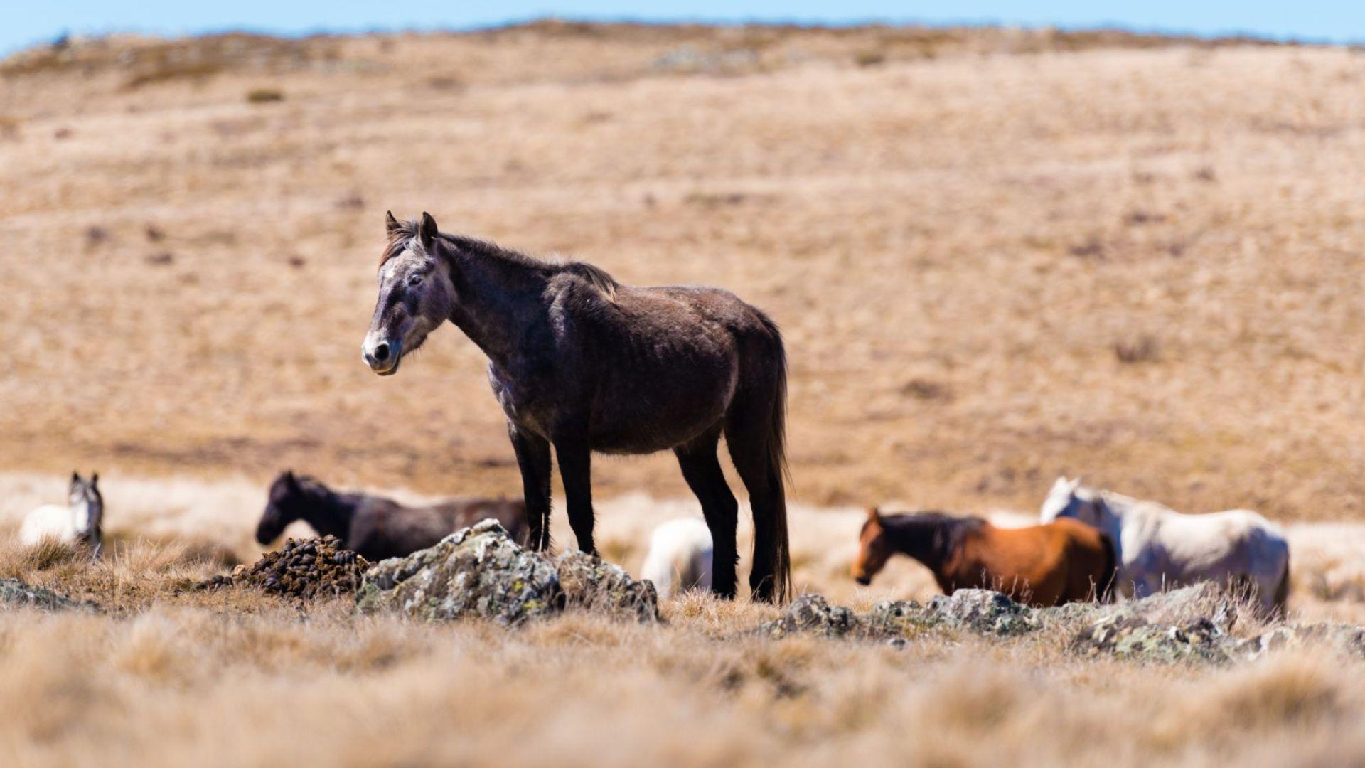 Горещините в Австралия са причинили смъртта на много диви животни