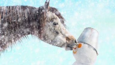 Коне се наслаждават на дълбокия сняг в Австрия (забавно видео)