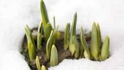 Януари отива към безславен край с меко и сухо време