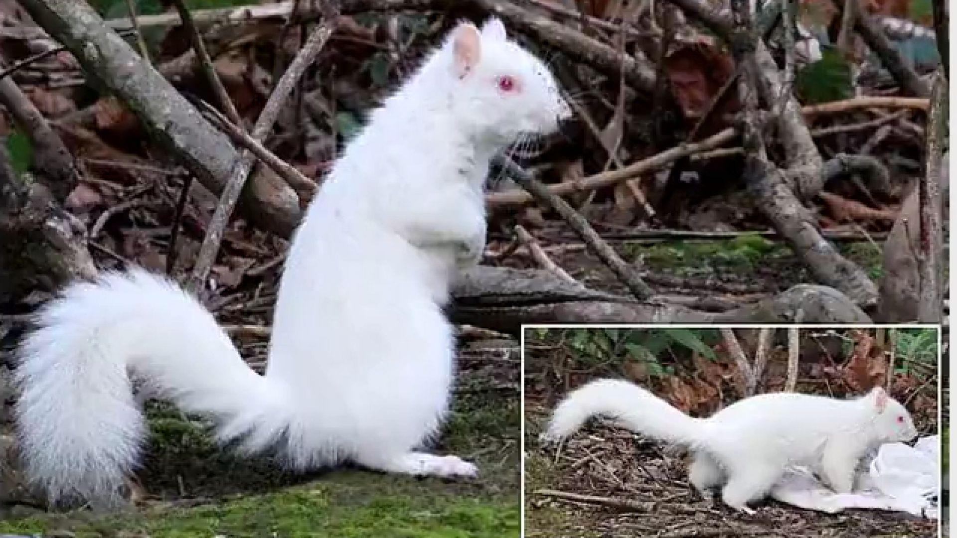 Британец засне катерица албинос след двегодишно чакане