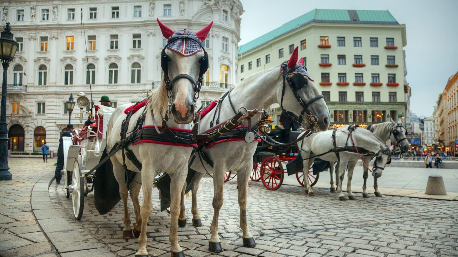 Конете във Виена вече ще са с пластмасови подкови