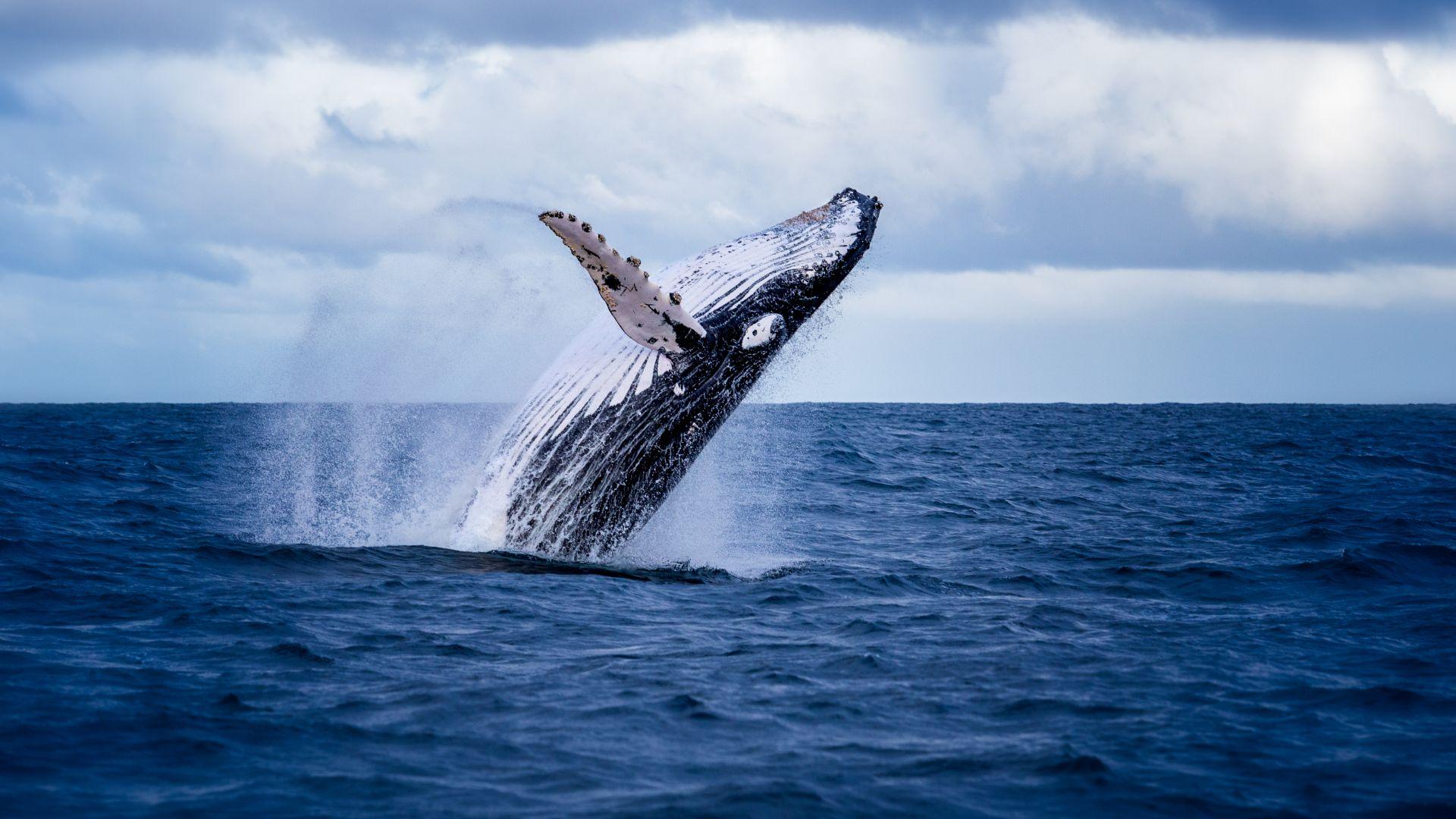 Китовете са стресирани от военните сонари