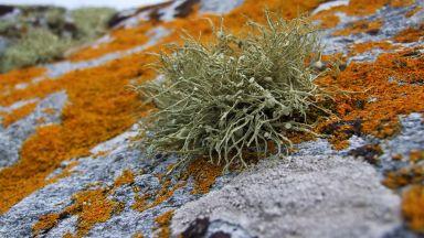 """Затоплянето в Арктика """"съживява"""" изчезнали растения"""