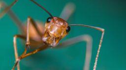 Заснеха най-бързата мравка в света (видео)