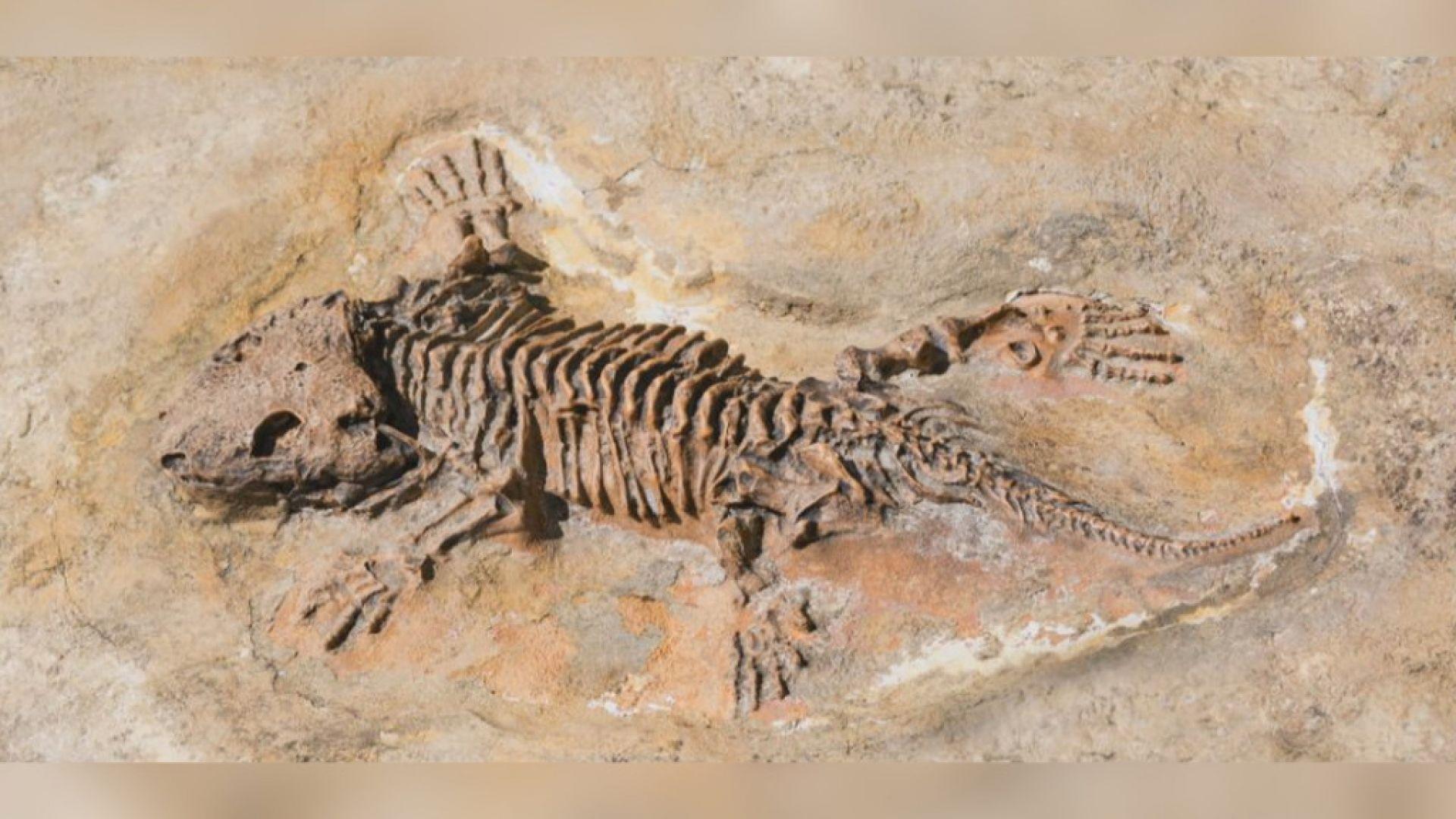 """Учени """"възкресиха"""" влечуго, живяло преди 290 млн. години"""