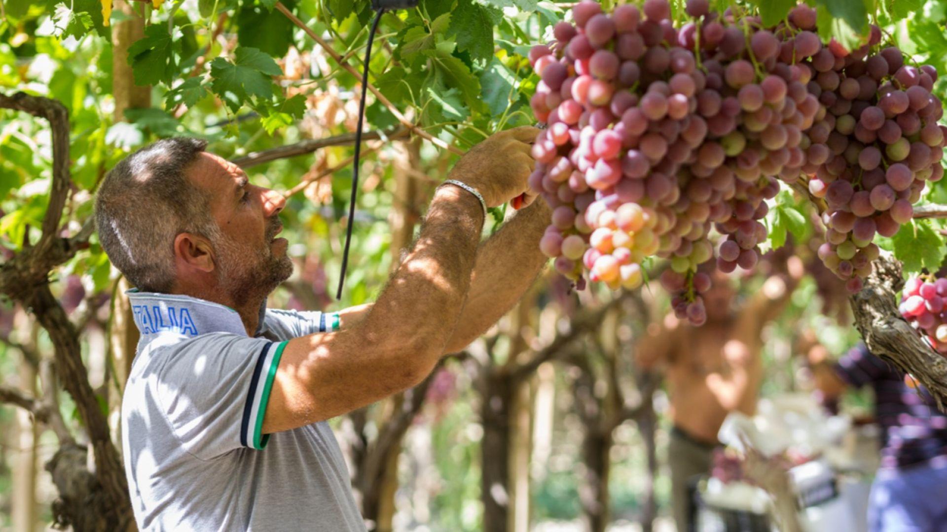 Стартира кампания в подкрепа на българското производство
