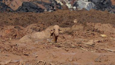 Смразяващи кадри - как токсичната кал помете всичко по пътя си в Бразилия