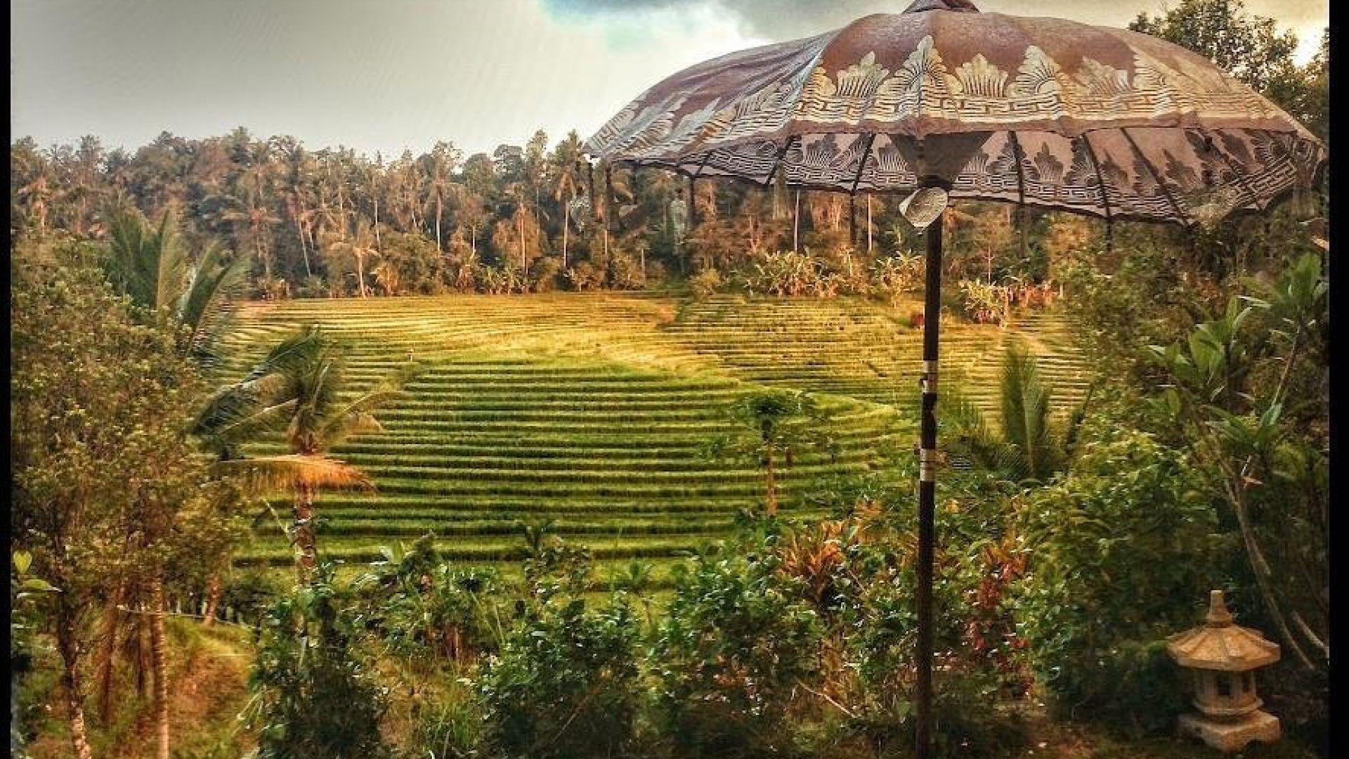4 млрд. долара загуби от коронавируса за индонезийския туризъм