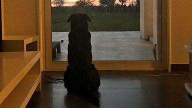 Кучето на Сала си взе последно сбогом с Емилиано и разплака света