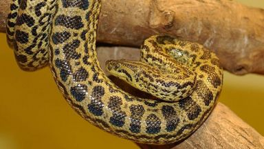 The snake does not escape in Plovdiv instead, and they are still in a position; find tomorrow