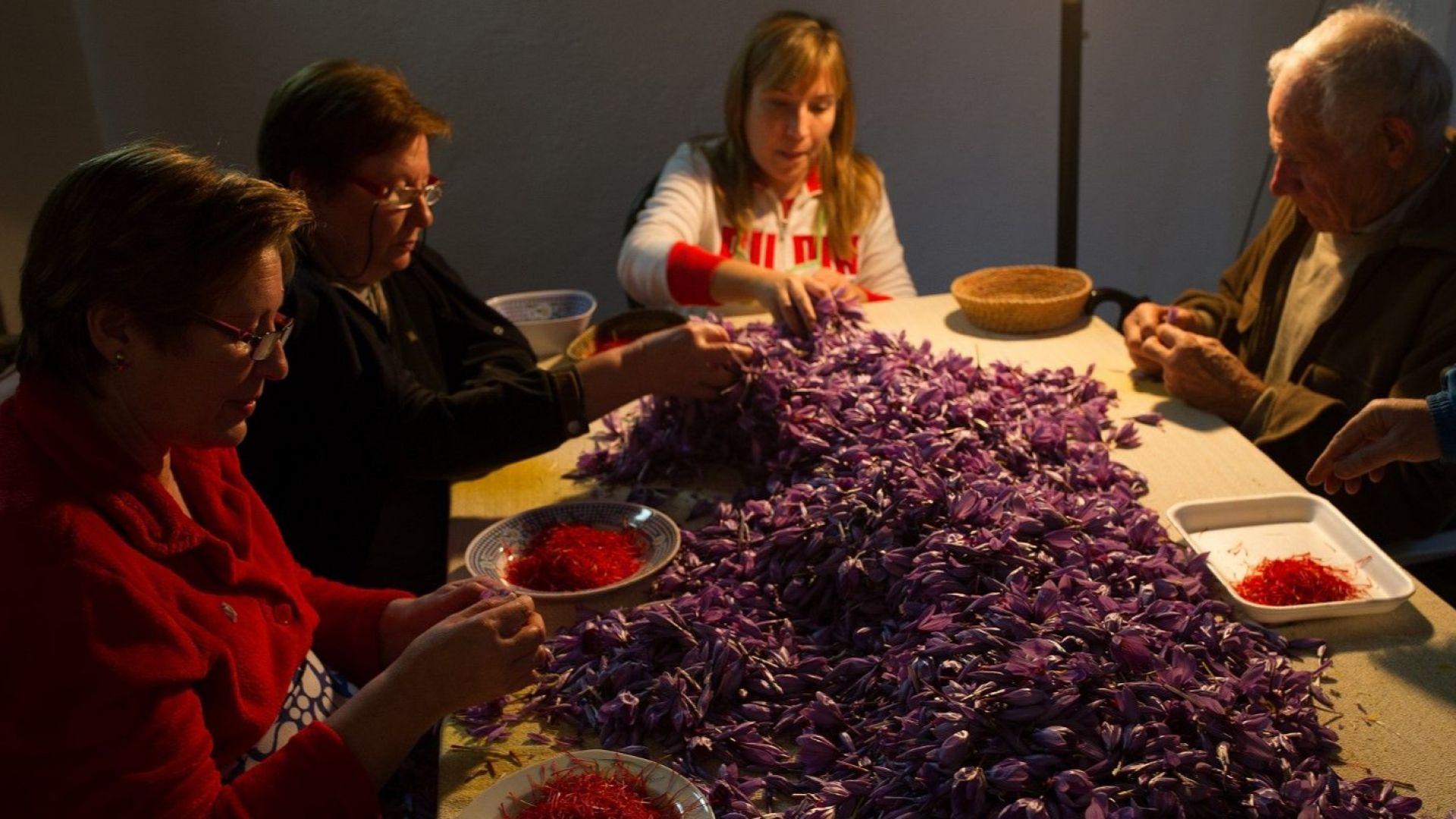България е №1 по качество на произвеждания шафран