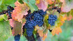 Лятото продължава и през септември - добра новина за гроздето