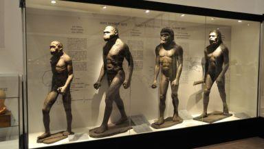 Откриха неизвестен прародител на човека