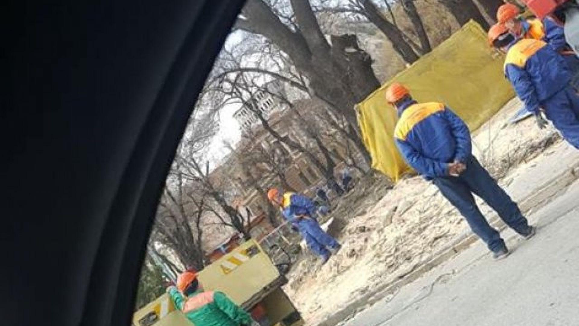 Снимка: Озеленители контузиха лекарка в скандал за дърво
