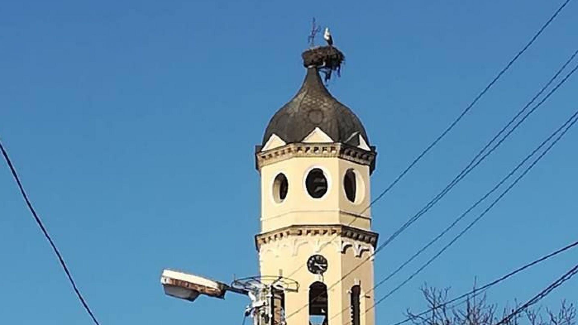 Щъркел пристигна на най-високата камбанария на Балканите