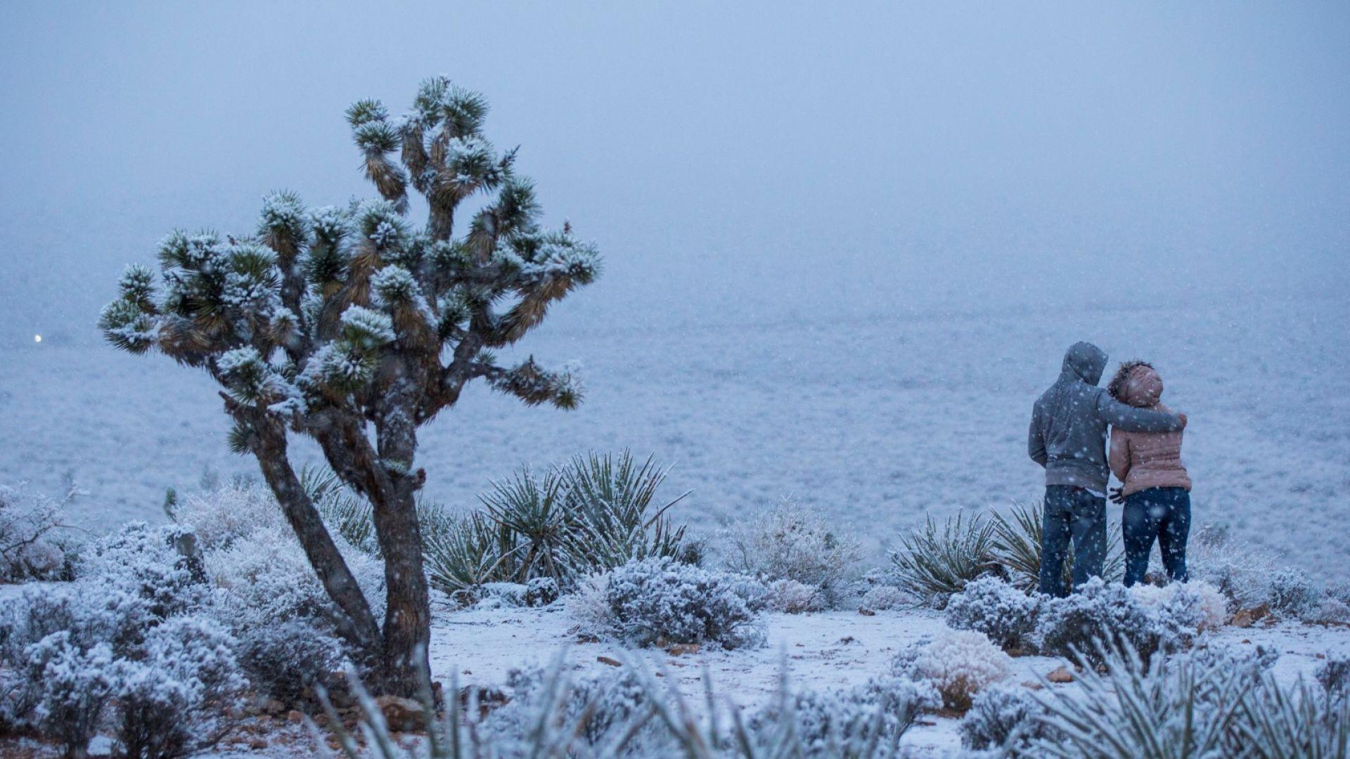 Снимка: Сняг валя за пръв път от десетилетия в пустинния Лас Вегас