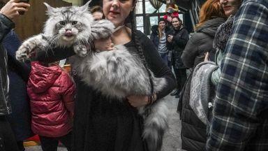 Кoд Мяу: Среща на котешкия елит в София