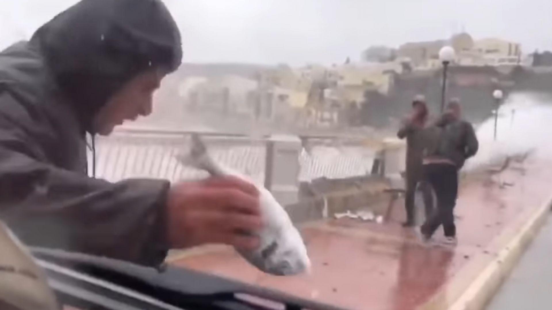"""Вятър предизвика """"дъжд"""" от риби"""" в Малта, а над Гибралтар едва не свали самолет (видео)"""