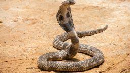 73-годишна жена уби кобра с лопата