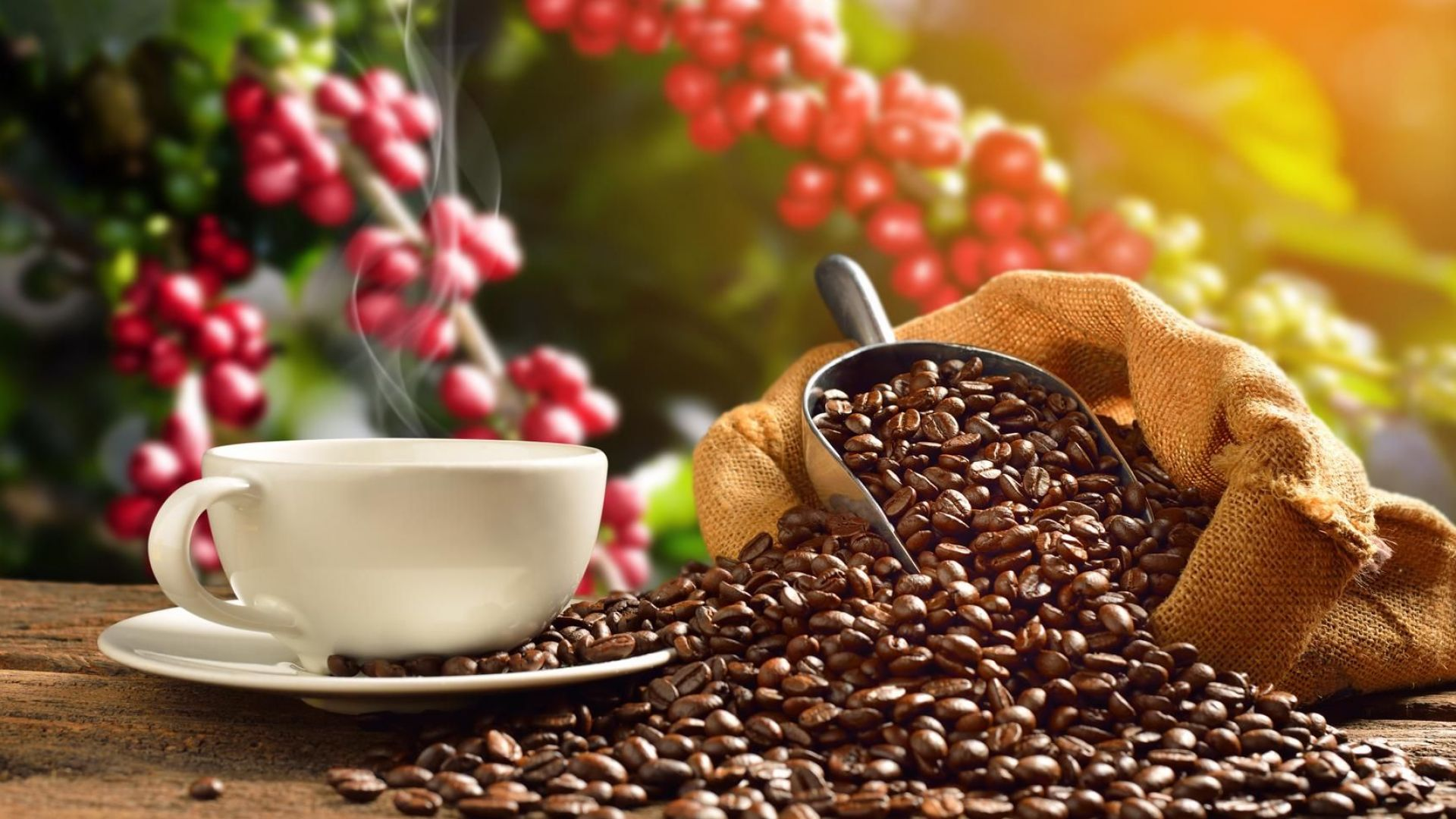 Производителите на кафе очакват загуби или как се прибира реколта в условия на пандемия