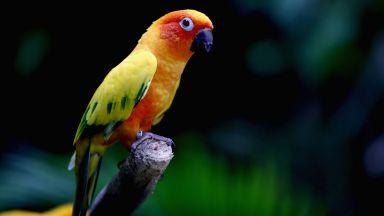 Баба научи папагала си да пее оперни арии, за да дразни съседите си