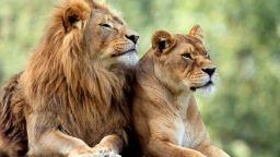 Спасяват животните от най-зловещия зоопарк в света